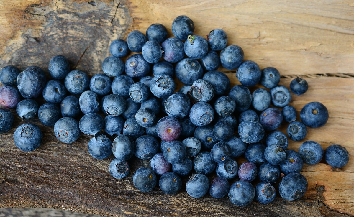 blueberries-2270379_1920 red